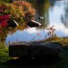 "Asticou Gardens reflections with fall foliage color, Northeast Harbor, Maine, October For more garden flowers of Maine visit <a href=""http://www.robinrobinsonmaine.com/MaineBOTANICALSwildflowers/BOTANICALS/13997293_xThqdt"">http://www.robinrobinsonmaine.com/MaineBOTANICALSwildflowers/BOTANICALS/13997293_xThqdt</a>"