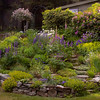 "Coastal garden, Phippsburg Maine. This garden makes great use of a small, steep slope. The driveway curves around from the garage above and cars are parked where the photographer was standing. It is great use of a difficult yard space. For more garden flowers of Maine visit <a href=""http://www.robinrobinsonmaine.com/MaineBOTANICALSwildflowers/BOTANICALS/13997293_xThqdt"">http://www.robinrobinsonmaine.com/MaineBOTANICALSwildflowers/BOTANICALS/13997293_xThqdt</a>"