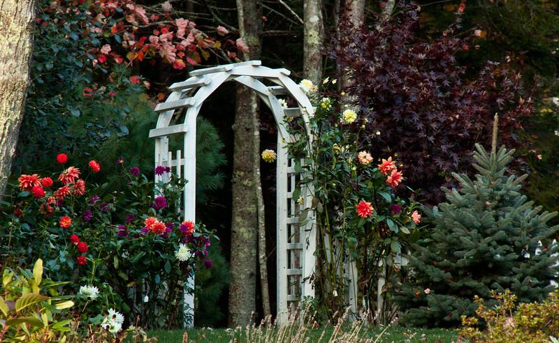 "Mixed Dahlia garden with classic, white trellis, Sebasco Harbor, Phippsburg, Maine, fall For more garden flowers of Maine visit <a href=""http://www.robinrobinsonmaine.com/MaineBOTANICALSwildflowers/BOTANICALS/13997293_xThqdt"">http://www.robinrobinsonmaine.com/MaineBOTANICALSwildflowers/BOTANICALS/13997293_xThqdt</a>"