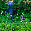 "garden statuary of child looking as if she's been tickled by the flowers, Wood Anemones, Flos-cuculis with English Boxwood hedge, Coastal Maine Phippsburg garden in late spring/early summer For more garden flowers of Maine visit <a href=""http://www.robinrobinsonmaine.com/MaineBOTANICALSwildflowers/BOTANICALS/13997293_xThqdt"">http://www.robinrobinsonmaine.com/MaineBOTANICALSwildflowers/BOTANICALS/13997293_xThqdt</a>"