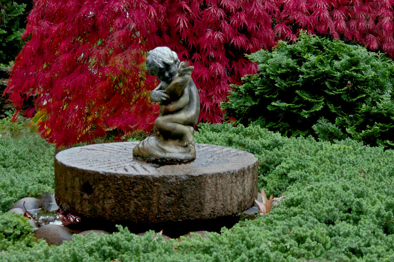 """Garden statue, boy with fish,  coastal Maine Garden, Phippsburg, Maine, fall, autumn, juniper Blue Rug, Japanese maple, Shidare Inaba in red, fall color For more garden flowers of Maine visit <a href=""""http://www.robinrobinsonmaine.com/MaineBOTANICALSwildflowers/BOTANICALS/13997293_xThqdt"""">http://www.robinrobinsonmaine.com/MaineBOTANICALSwildflowers/BOTANICALS/13997293_xThqdt</a>"""