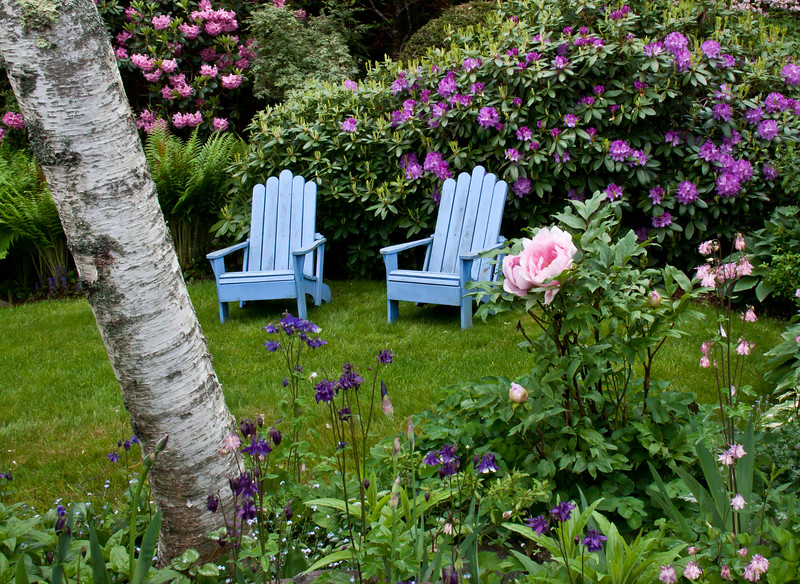 "periwinkle blue Adirondack chairs in a garden with purple rhododendrons, pink and purple columbines and a pink tree peony, coastal Phippsburg Maine garden in early summer For more garden flowers of Maine visit <a href=""http://www.robinrobinsonmaine.com/MaineBOTANICALSwildflowers/BOTANICALS/13997293_xThqdt"">http://www.robinrobinsonmaine.com/MaineBOTANICALSwildflowers/BOTANICALS/13997293_xThqdt</a>"