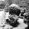 "Fresh snowfall on my coastal Maine, Phippsburg gardens, study in black and white. Japanese pagoda with Japanese Maple, clipped shrubs, junipers and balsam trees. For more garden flowers of Maine visit <a href=""http://www.robinrobinsonmaine.com/MaineBOTANICALSwildflowers/BOTANICALS/13997293_xThqdt"">http://www.robinrobinsonmaine.com/MaineBOTANICALSwildflowers/BOTANICALS/13997293_xThqdt</a>"
