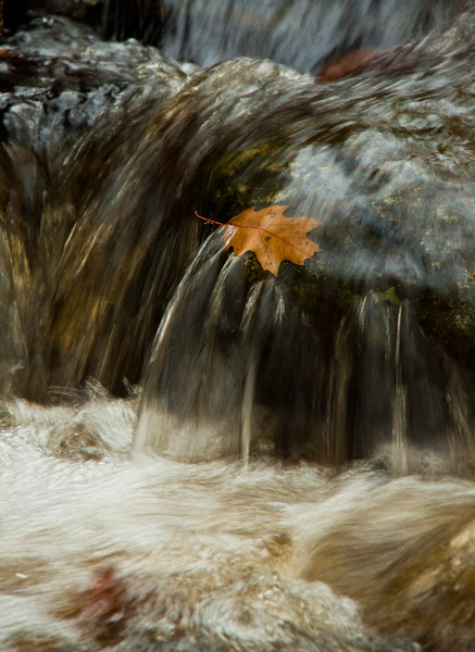 leaf trapped in waterfall, autumn/fall, North Creek Phippsburg Maine