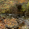brook in fall/autumn with fallen leaves, North Creek, Phippsburg Maine