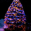 blue and white lights on balsam tree decorated for Christmas deep in snow, Phippsburg, Maine winter