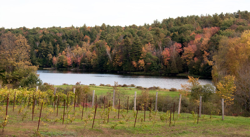 Vineyard, Oakfield Maine in fall with foliage and the Messalonskee stream