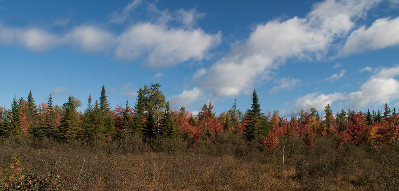 autumn foliage scene, trees with blue sky and clouds, fall, Maine