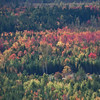 autumn foliage seen from the air, Maple, Oak, Birch and Poplar mixed with spruce. Gold, orange, yellow and red, Rockwood, Maine from the air