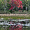 Reflection of single red, Maple in pond, Acadia National Park, Mount Desert Island, Maine, September 2012