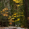 Gold autumn foliage on trail with fresh snow, late fall, Phippsburg, Maine scenic