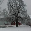 Horse Chestnut tree covered in fresh snow from my friend's yard in Thomaston, Maine. Anthony Bourdain, famous food writer, did an episode of No Reservations in this red building on the St. George River.