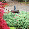 brilliant red, Japanese maple tree with fountain of child clutching a fish looking up a road in autumn. This is a scene in my yard looking up my driveway.