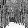 trail to Fort Baldwin, in winter snow through the trees, black and white, Popham, Phippsburg, Maine