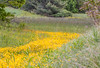 """For a list of protected and endangered wildflowers in Maine see <a href=""""http://plants.usda.gov/java/threat"""">http://plants.usda.gov/java/threat</a> Wildflowers should be left undisturbed where they are found. To uproot and attempt to transplant them puts the species at risk. Wildflowers are dependent on very specific soil, water and light requirements which a home gardener can rarely reproduce."""