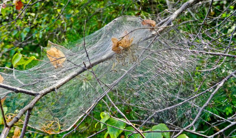 Catipiller Nest, Kennebunk Plains, Kennebunk ME
