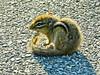 Baby Chipmunk, Old Fort Point, Kennebunkport, ME