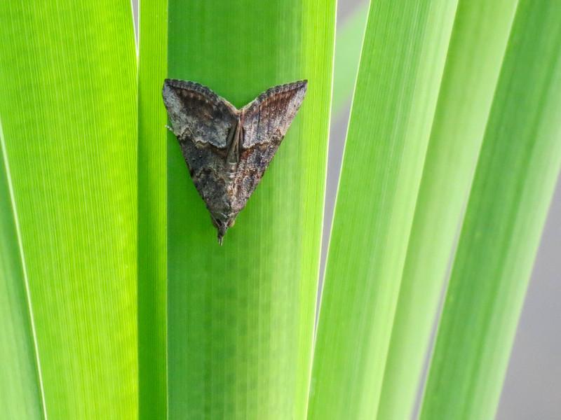 Moth, Quest Pond, Kennebunk ME