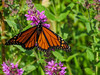 Monarch, Goodall Drive, Kennebunk ME