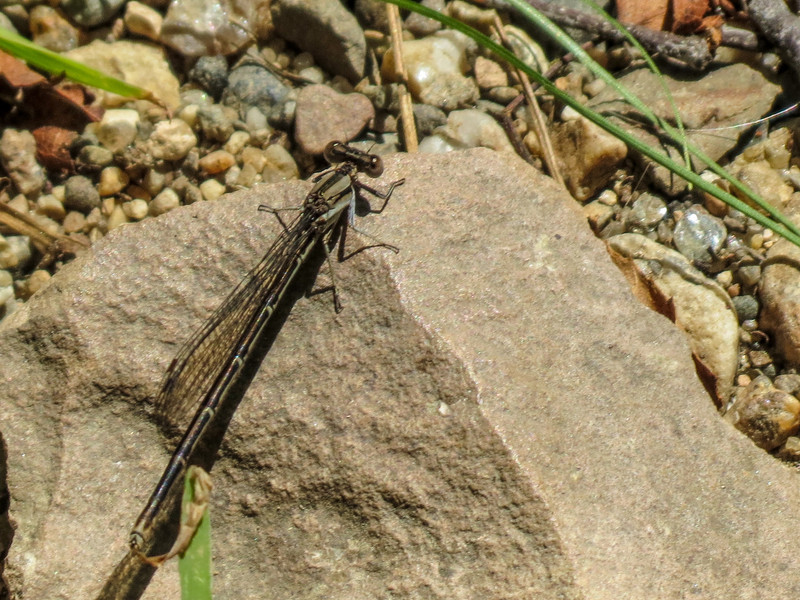 Fm Bluet (?), Kennebunk Plains, Kennebunk ME