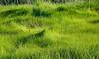 Rt. 9, Little River Marsh, Kennebunk ME