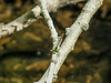 Fragile Fortatil, Emmons Preserve, Kennebunkport, ME