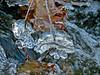 Emons Preserve, Kennebunkport, ME