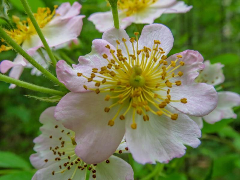 Berry Blossom, Kennebunk Bridle Path, Kennebunk ME