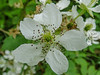 Berry Blossom, Kennebunk Bridle Path, Kennebunk ME