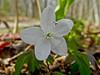 Rachel Carson NWR, Wells ME 5/11