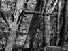 Rachel Carson NWR, Wells ME 4/11