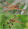 Dragonfly ponds and Kennebunk Plains