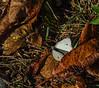 Timber Point Trail, Rachel Carson NWR, Biddeford ME