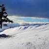 """""""Tree, Sky, Snow"""""""
