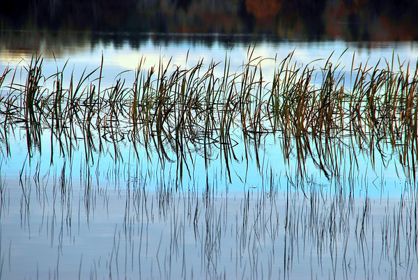 Reeds surrounded by soft pastels of water, sky and clouds.