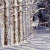 """Wintry Path"""