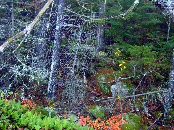 Spider web with clinging moisture beads - Sedgwick, ME
