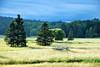 Farmers field - MDI