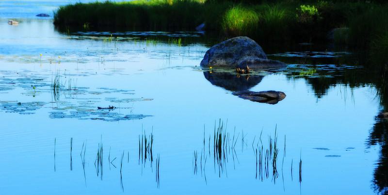 Pond near Surry.