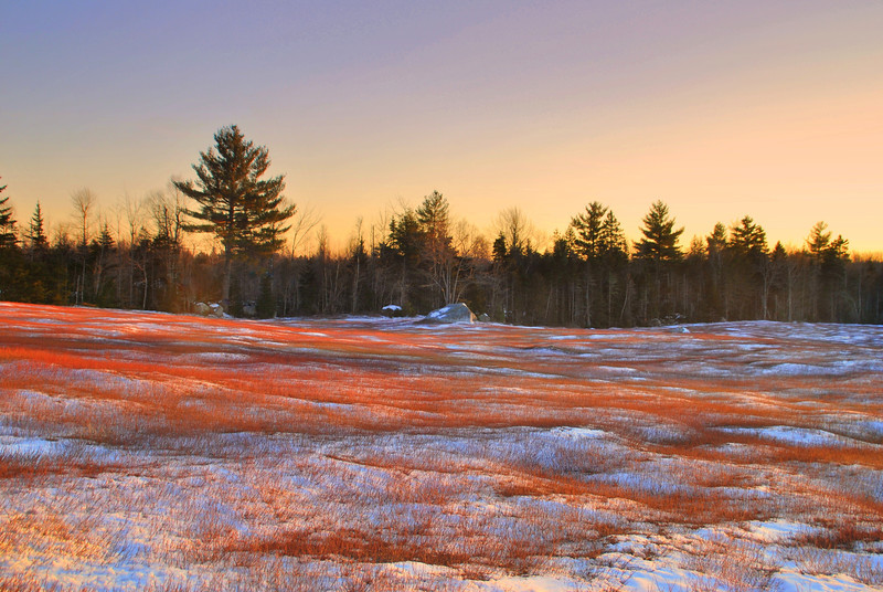 Blueberry barren near Branch Pond - covering of light snow.
