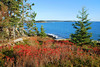DSC_0094-1 Schoodic in the fall