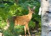 DSC08379-2 Bambi 31 Aug 11 MDI