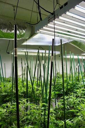 17.02.24 Central Maine Grow Room