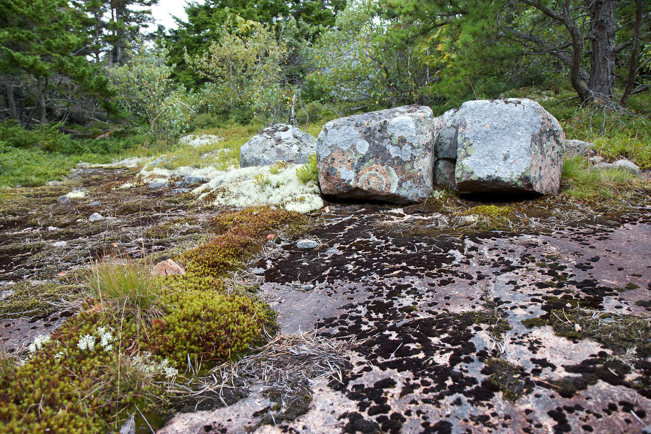 Hiking Trail at Acadia National Park<br /> <br /> I was interest in the beautiful moss that grows on the rocks in the park.