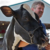 Windsor Fair, August 27, 2012<br /> <br /> Another cow photo