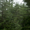 Acadia National Park, Spider Web, August 14, 2016