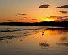 Coastal Maine Sunset
