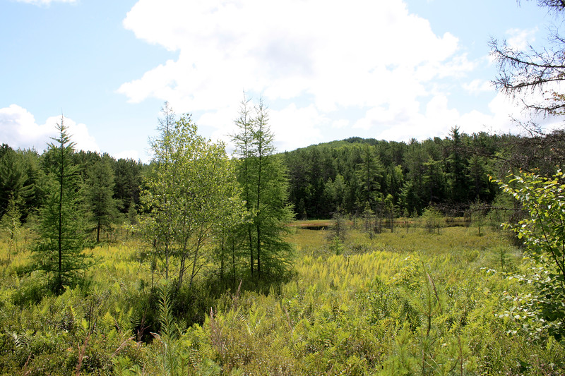 floating bog, near Baxter State Park, Maine