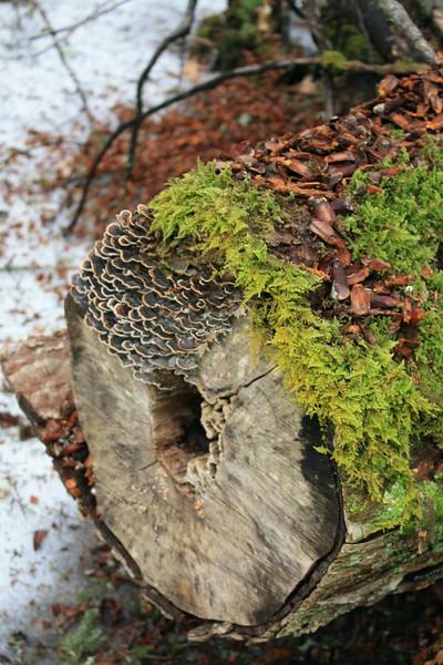 living log