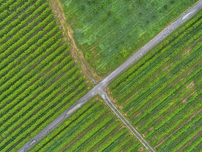 Vineyard Abstract